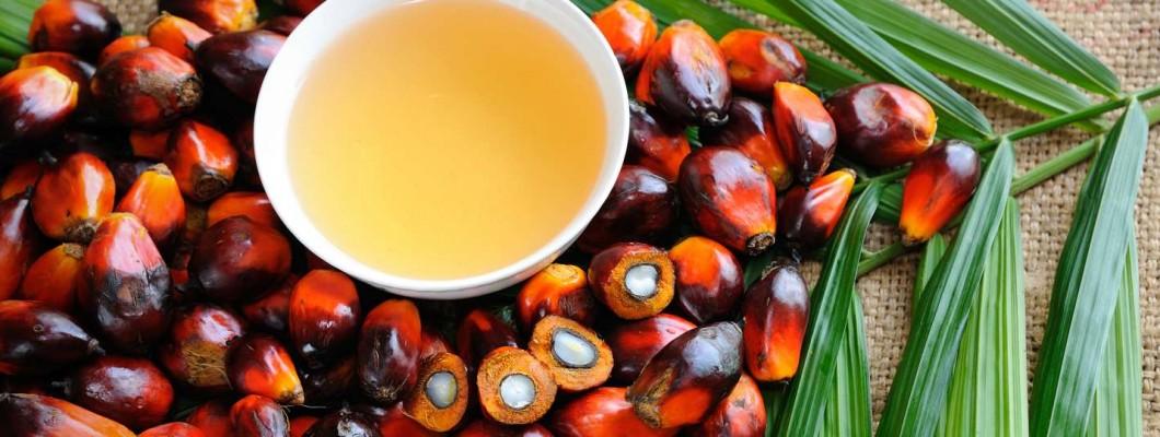 Aggodalmak a pálmaolajjal kapcsolatban
